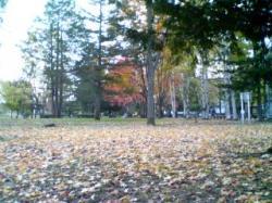 春光園の中は落ち葉がいっぱい(^^)