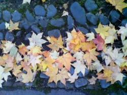 落ち葉がきれいです♪