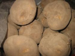 これは美瑛産のジャガイモです(^^)
