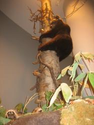 木登りしている熊も(*^_^*)