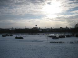 今朝の旭川 積雪状態です