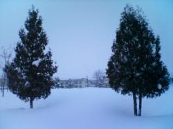 クリスマスツリーみたい♪