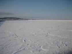 ここ、凍っているけど港です(^^)