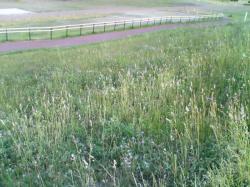 堤防は今草が伸び放題