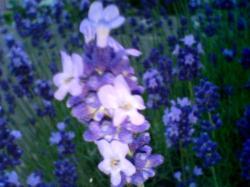 近くで見るとかわいい花が・・・
