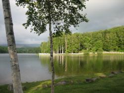 湖に映る木々がきれいです(*^。^*)