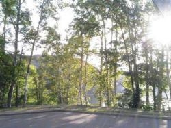 夕暮れの木漏れ日