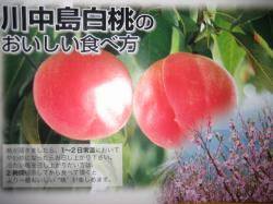 福島県川中島の白桃