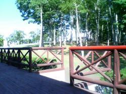 レストハウスの裏は白樺の林