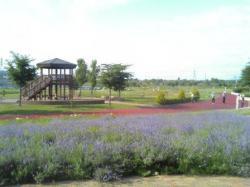 ラベンダーの咲く中でパークゴルフ(^^)