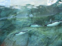ペンギン館の水中トンネル
