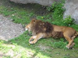 暑い日は・・・(^^ゞ ライオンもかわいいね♪