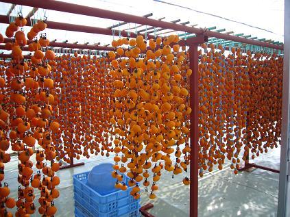 干し柿のハウス