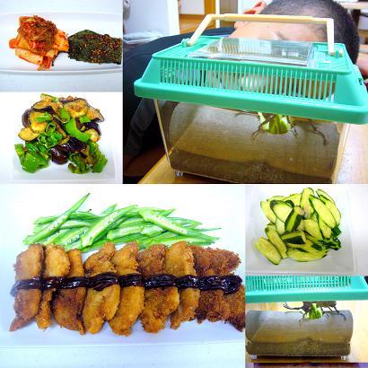 夏野菜とカブトムシ