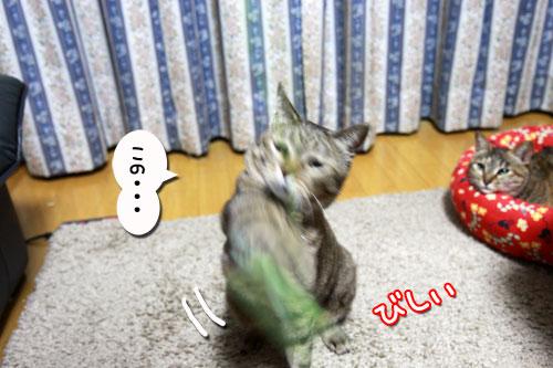 IMG_5179.jpg