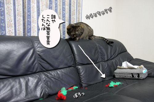 IMG_7774_20090516182410.jpg