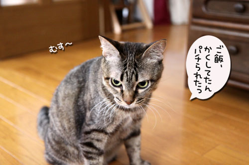 IMG_9866_20090613195248.jpg