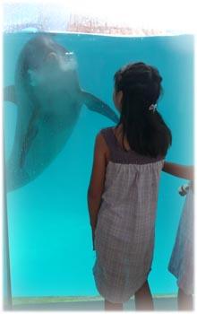 イルカとお話2