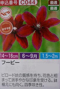 P1040581_fubi.jpg