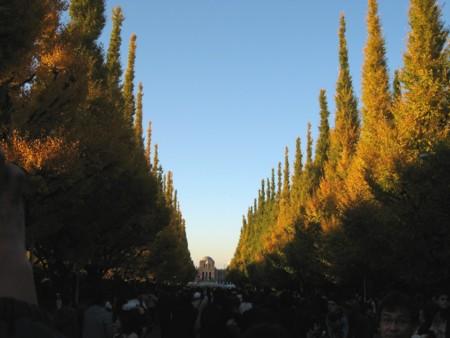 絵画館へ続く銀杏並木