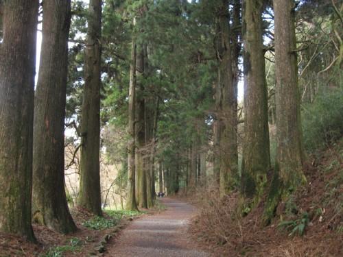 箱根杉並木2