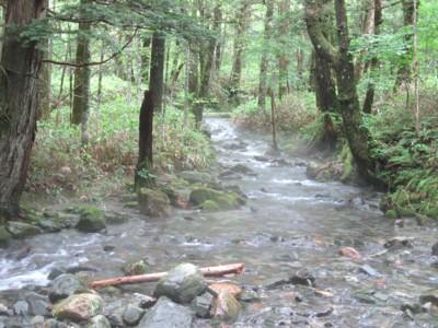 河童橋から明神池への森の中