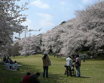 桜2009-4-004