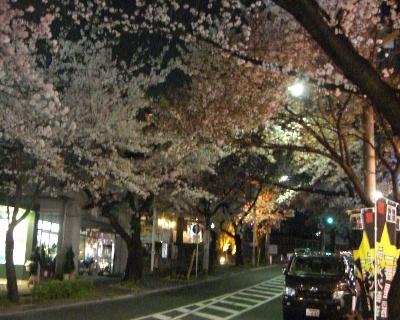 桜2009-4-005