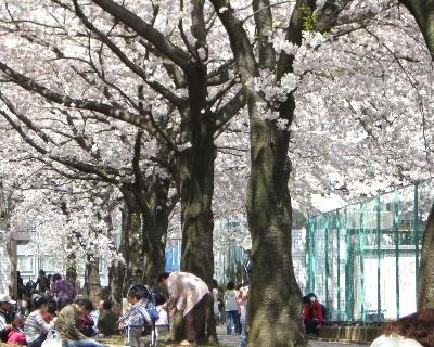 桜2009-4-006