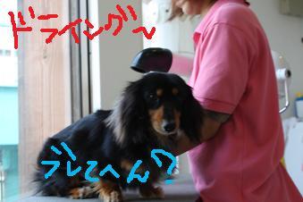 IMG_7018.jpg