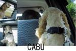 060802cabu-1.jpg