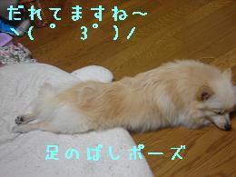 asinobasi.jpg
