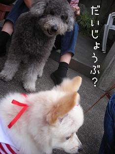 daijyobu.jpg
