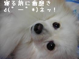 nettu.jpg