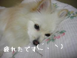 tukareta_20071126194349.jpg