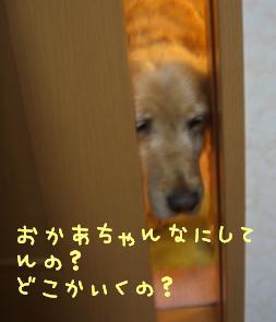 CIMG1477.jpg