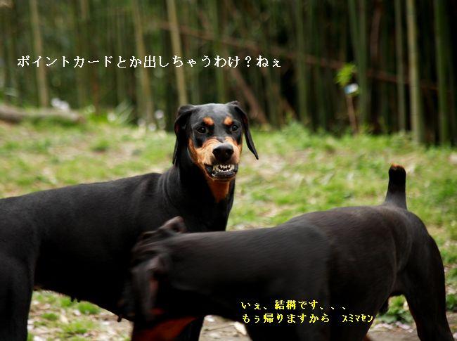 20090427_012tenin3.jpg