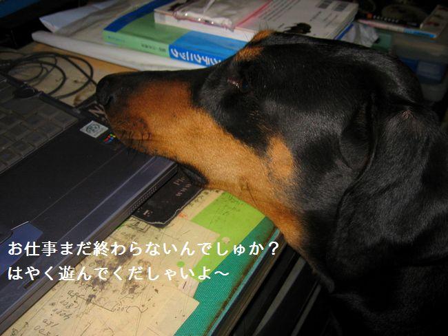 IMG_0774asobu1.jpg
