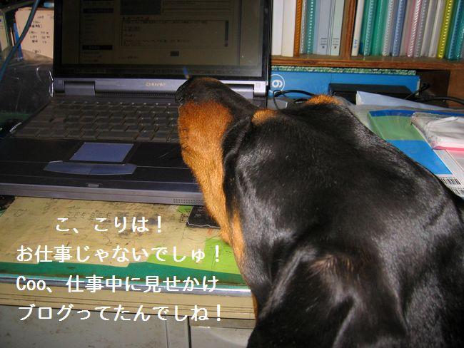 IMG_0775asobu2.jpg