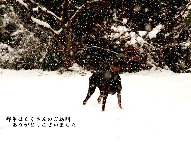 IMG_9733d.jpg