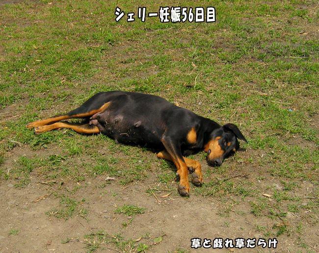 daizyoubukai2.jpg