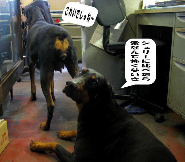 daizyoubukai4.jpg