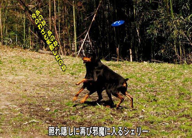 kaizoku5.jpg