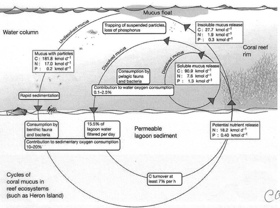 Coral mucus functions as an enrgy carrier and particle trap in the reef ecosystem