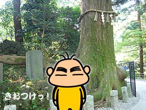 takao_07.jpg