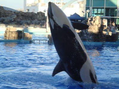 aquarium01563s.jpg