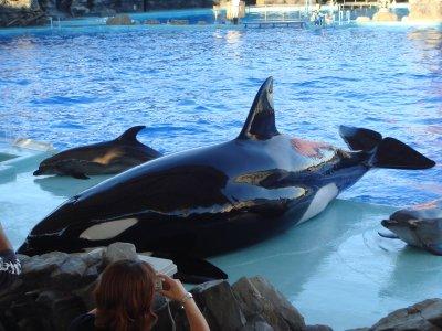 aquarium01566s.jpg