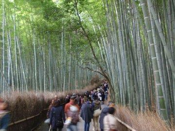 bamboo220034s.jpg