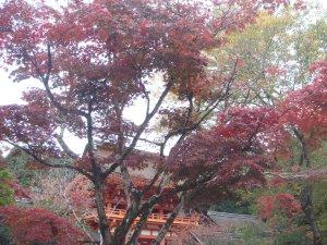 kamigamo06712s.jpg