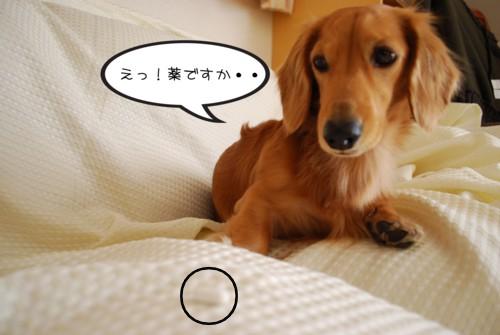 2DSC_2210.jpg